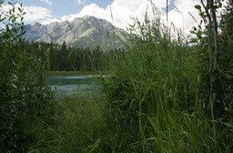 Along the Bow River in Banff