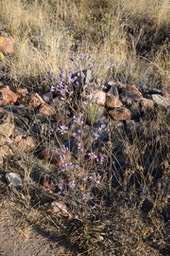 flowers among the rocks and dead grass