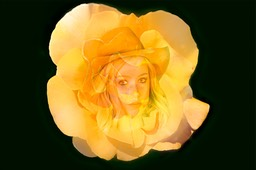 Yellow_rose_of_texas_6